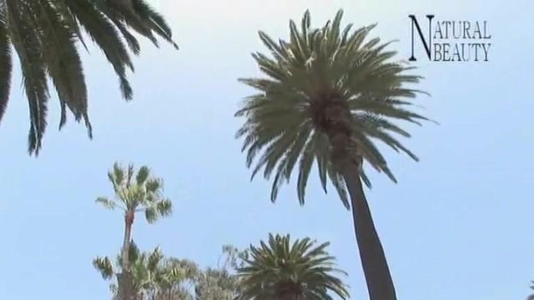 Video 995394-Image 6